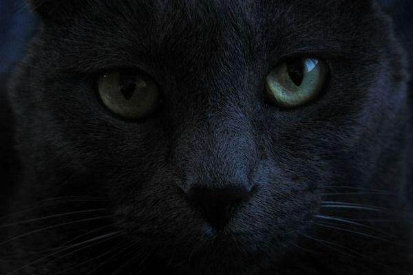 В кои страни черните котки носят късмет