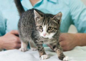 V akom veku sú mačiatka očkované?