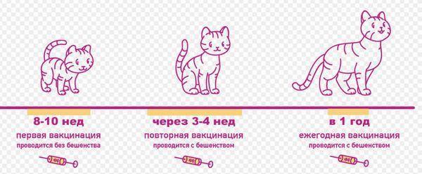 Схема вакцинації кошенят.