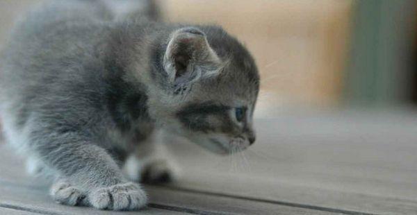 кошеня ходить