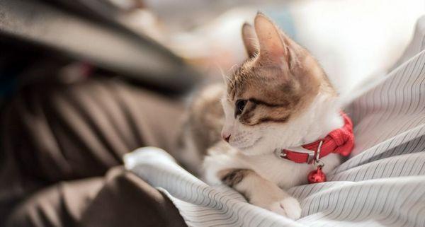 V akom veku sú mačky kastrované a následky