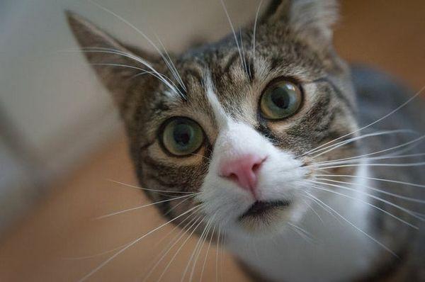 смішна кішка