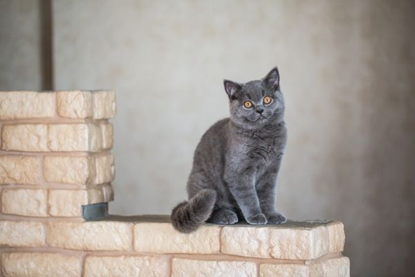 V akom veku začínajú mačky označovať územie