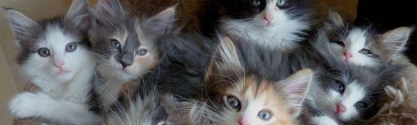 V akom veku môžu byť mačiatka odobraté mačke a dané novému majiteľovi