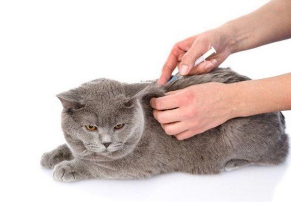 укол коту