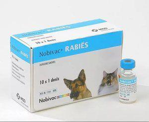 Можливі побічні явища і ускладнення при застосуванні вакцини Нобівак