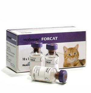 Застереження щодо імунізації кішок препаратом Нобівак