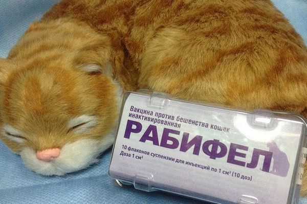 Рабіфел для кішок