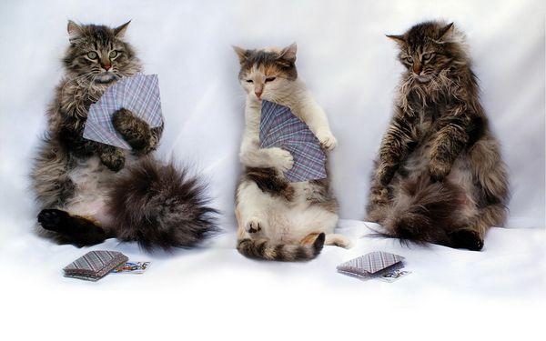 гра з кішкою