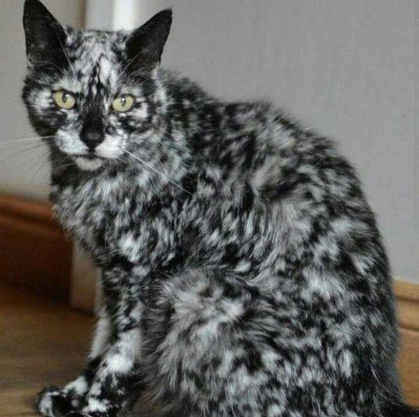 Nádherné zvieratá s neuveriteľnou farbou vitiligo