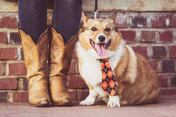Собака з господарем