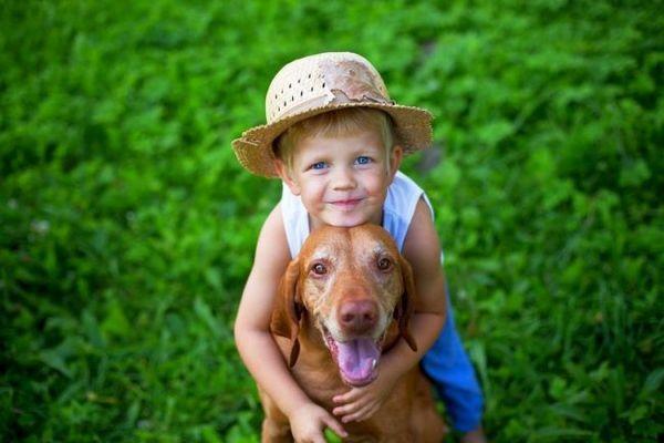 Угорська вижла - товариський, доброзичливий і добродушний пес, який неодмінно знайде спільну мову з дітьми