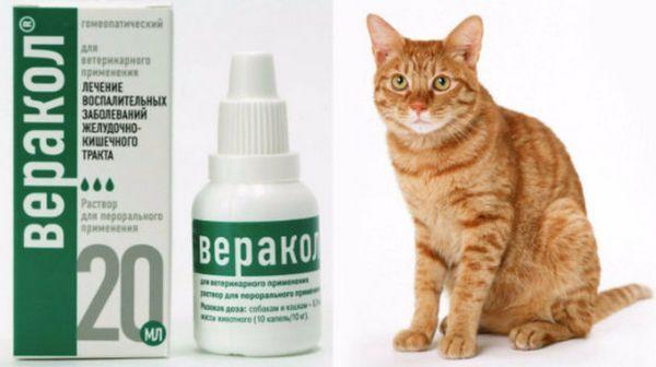 «Веракол»: як застосовувати для кішок