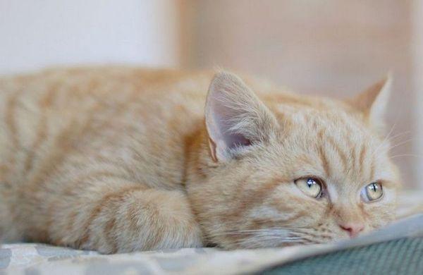 Апатія у кота