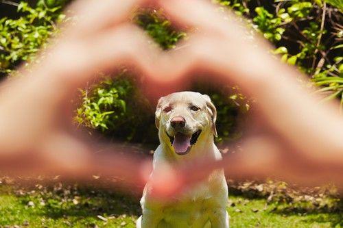 Jarné prechádzky: ako chrániť domáce zviera pred kliešťami?