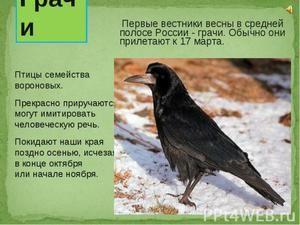 Птахи, що прилітають навесні