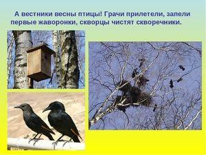 Особливість весняних птахів