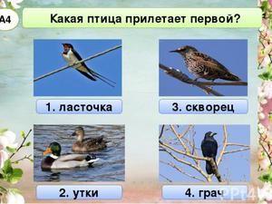 Які птахи перші прилітають навесні
