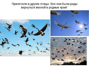 Перелітні птахи