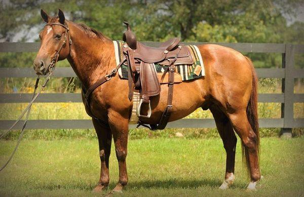 Вестерн, або ковбойський верхова їзда: в гармонії з конем