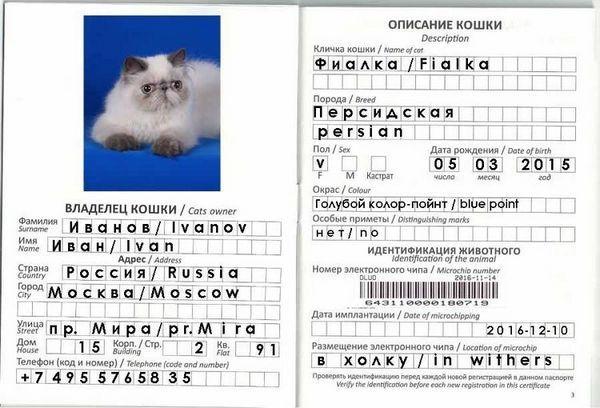 Проба на ветеринарен паспорт за котка