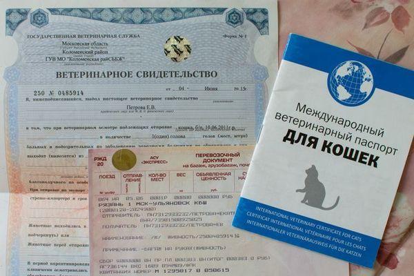 Международен ветеринарен паспорт за котка
