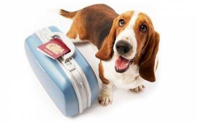 Veterinárny pas pre psov