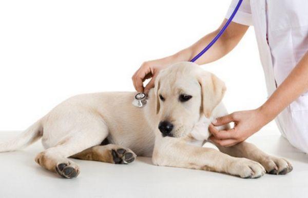«Тронціл» для собак