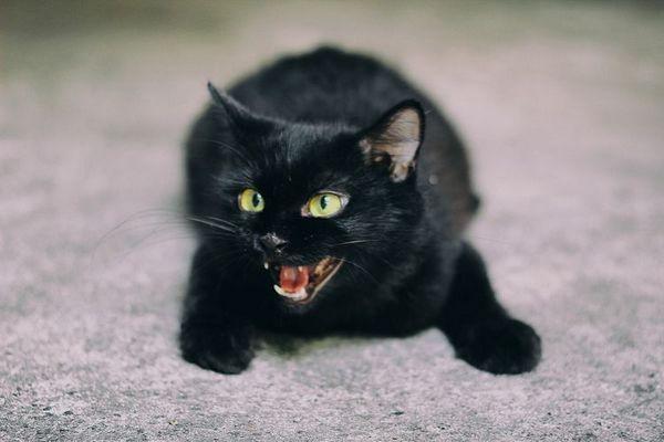 Чорний кошеня шипить