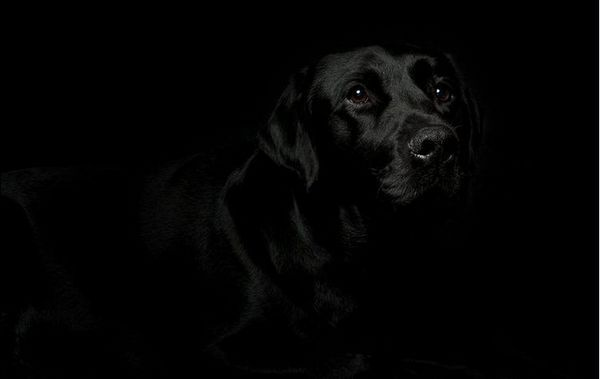 Пес в темряві
