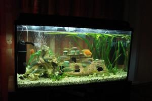 Відповідний акваріум для домашнього сомика