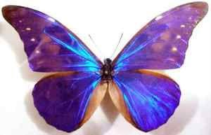 Druhy motýľov: vzhľad, odrody, štruktúra hmyzu