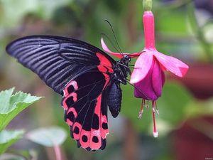 світ метеликів