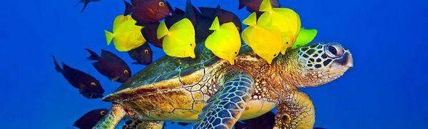 Druhy korytnačiek: popis, biotop, držanie doma