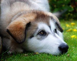 Druhy červov u psov a spôsoby zaobchádzania s nimi