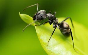 Druhy mravcov: štruktúra a opis