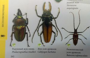 Druhy hmyzu a ich názvy