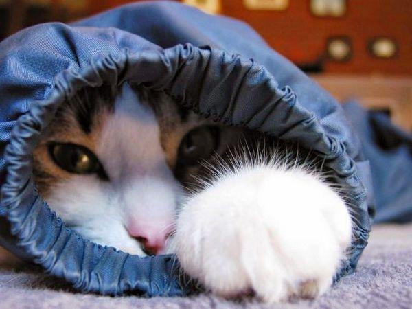 Typy liekov proti bolesti pre mačky