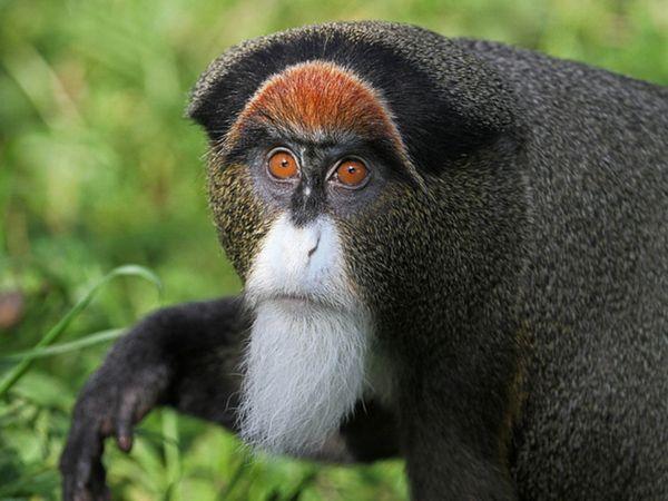 Незвичайні види мавп