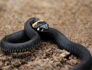 Видове змии, техните имена и описание
