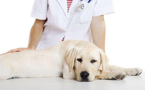 огляд ветеринара