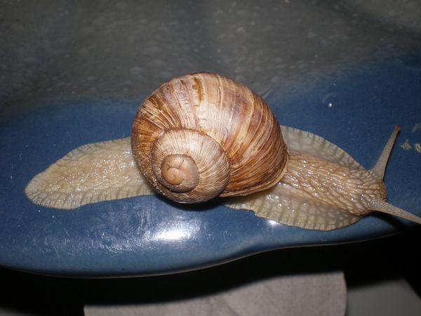 Равлики - цікавий вид молюсків