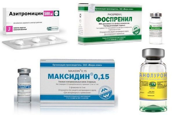 Лекарства за папиломатоза при кучета