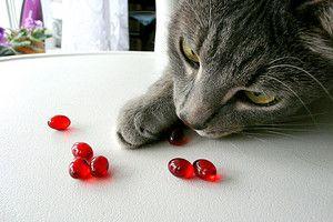 здоров`я кішок