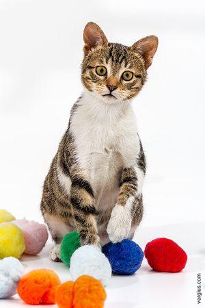 Коли кішкам необхідні вітаміни