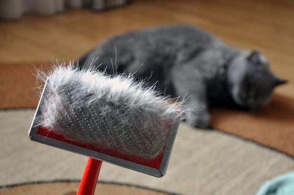 Vitamíny pre mačku proti vypadávaniu vlasov