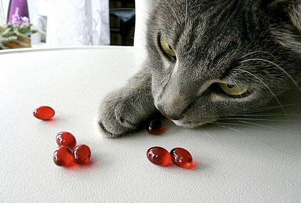 Вітаміни для кошенят