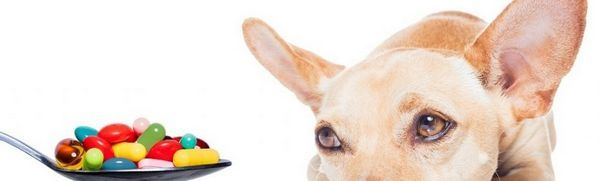 Vitamíny pre šteňatá malých, stredných a veľkých plemien: prehľad prípravkov