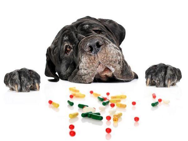 Витамини за кучета