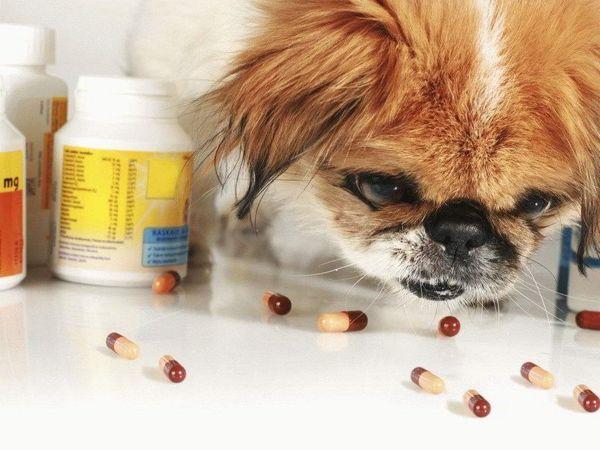 Вітаміни та добавки для собак великих і дрібних порід
